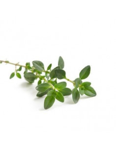 BIO thyme 15g biological dried for aromatherapy