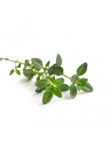Tymianek BIO 15g susz biologiczny do aromaterapii
