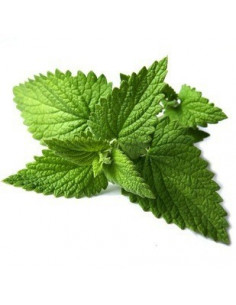 Lemon balm BIO 15g biological dried for aromatherapy
