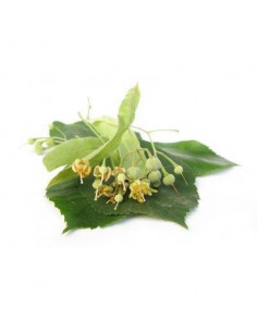 Lipa BIO 15g biological dried for aromatherapy