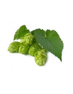 Hops BIO 15g biological dried for aromatherapy