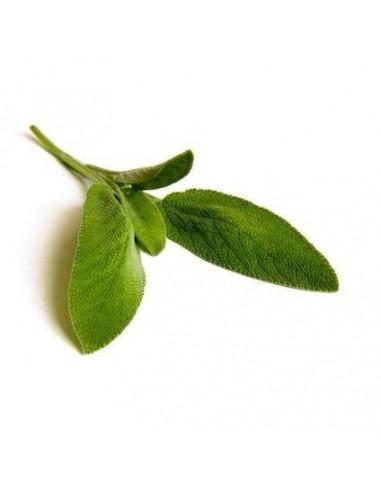 Szałwia BIO 15g susz biologiczny do aromaterapii