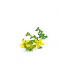 John's wort BIO 15g biological dried for aromatherapy