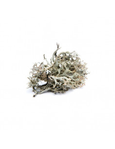 Icelandic moss BIO 15g biological dried for aromatherapy