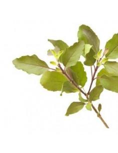 Tulsi (Asian basil) BIO 15g biological dried for aromatherapy