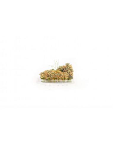 Susz CBD Kwiaty Konopi Green Candy...