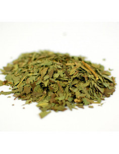 Eukaliptus BIO - susz do aromaterapii 10 g
