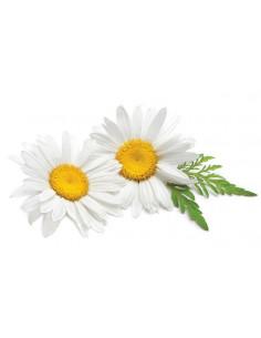 Rumianek BIO - susz do waporyzacji i aromaterapii