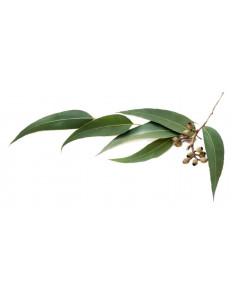 Eukaliptus BIO - susz do...