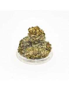 Dried CBD Mango Kush by Sativa Poland Hemp Flowers