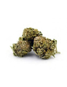 Susz CBD Flowrolls Amnesia Haze 4-6% CBD 1g